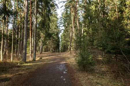 slope: Old track to forest
