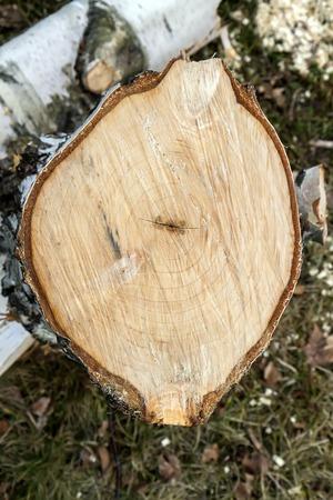 wood cut: Wood cut Stock Photo
