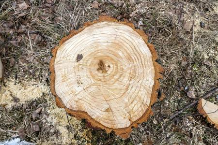 stump: Stump