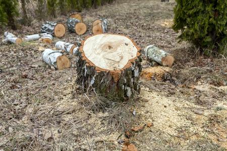 stump: tree stump Stock Photo