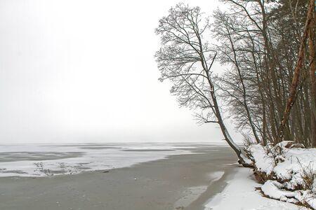 lagoon: Trees nead the lagoon