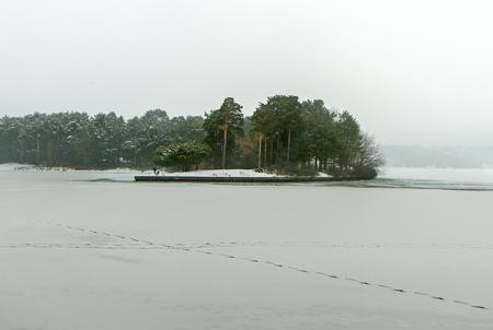 lagoon: Forest Near Lagoon