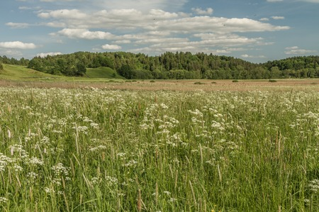 mounds: Fields With Flowers