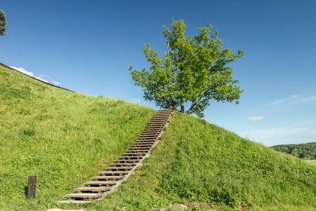 mound: Tree On Mound Stock Photo