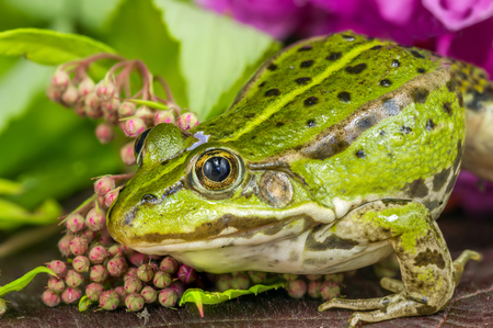 agalychnis: Frog On A Tree Branch Stock Photo