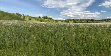 panorama: flowers of the field panorama