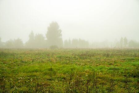 fog: Fog In Fields