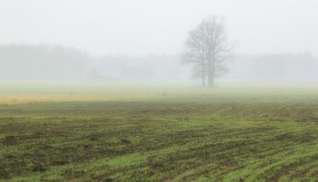 end of summer: Tree In Fog