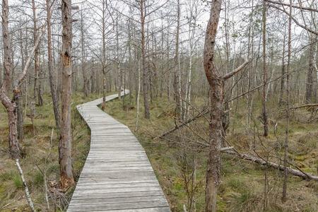 footbridge: ghastly swamp in evening Stock Photo