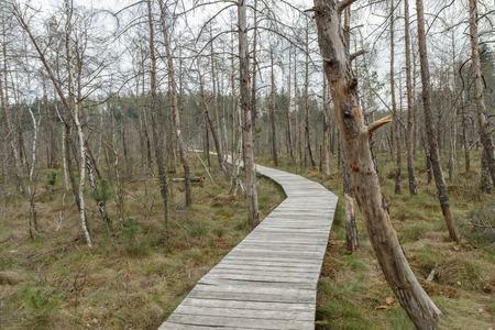 footbridge: road to swamp