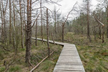 narrow and wooden bridge to the swamp