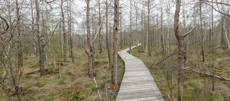 footbridge: swamp panorama Stock Photo