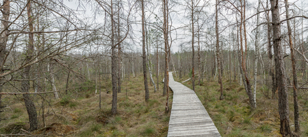sear: The trail going through the swamp panorama Stock Photo