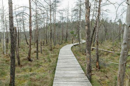 footbridge: wooden bridge to the swamp Stock Photo