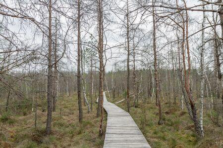 footbridge: narrow bridge to the swamp Stock Photo
