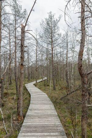 나무 다리