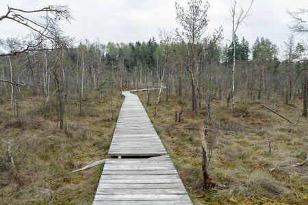 footbridge: The trailThe trail going through the swamp
