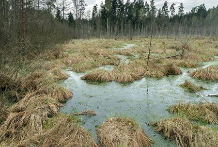 footbridge: Grass overgrown swamp