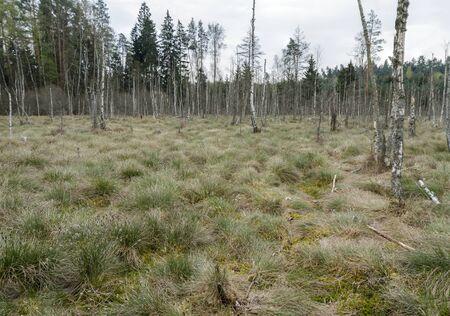 Grass overgrown