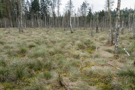 trees in swamp