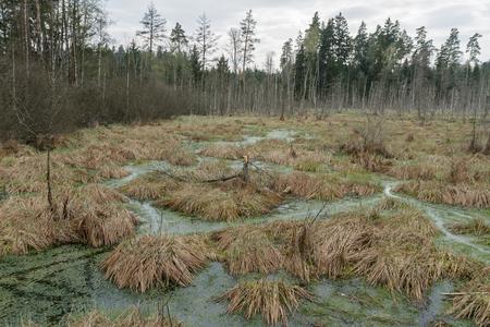 footbridge: Swamp in summer