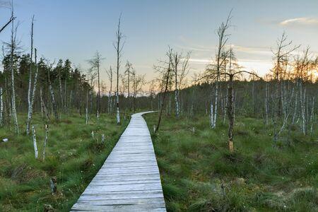 footbridge: Dubrawa swamp
