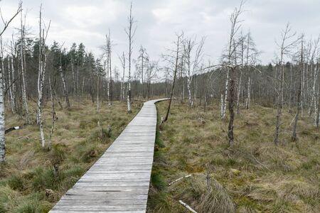 footbridge: The trail