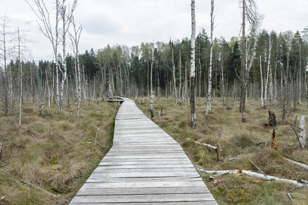 footbridge: The wooden trail