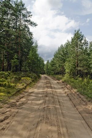 long road: Long road through the woods