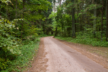 paved road through the forest
