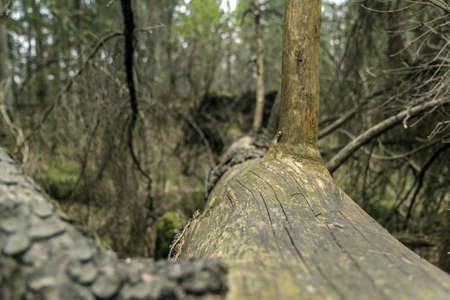 fallen tree: Fallen Tree Close Stock Photo