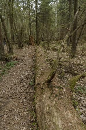 fallen tree: Fallen Tree In Forest