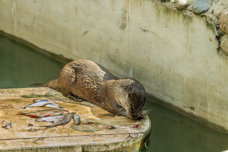 aonyx: Otter in the zoo