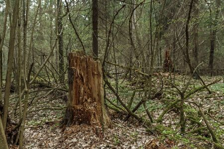 abandoned: abandoned forest Stock Photo