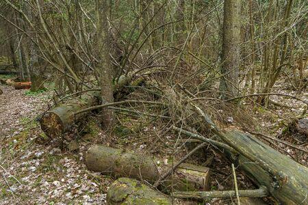 fallen tree: fallen and broken tree in forest