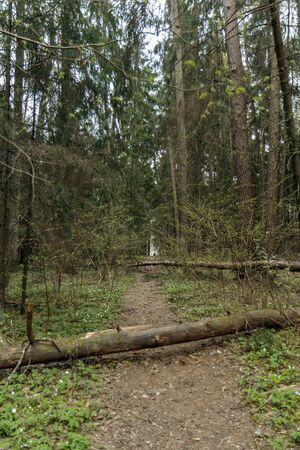 fallen tree: fallen and broken tree Stock Photo