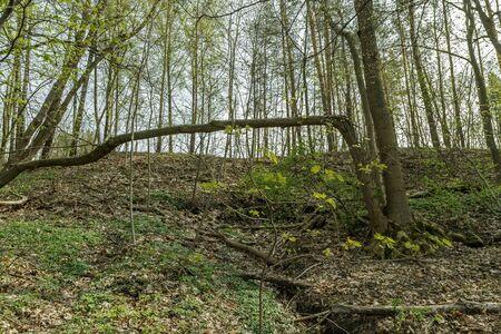 crashed: Dry tree and crashed tree Stock Photo