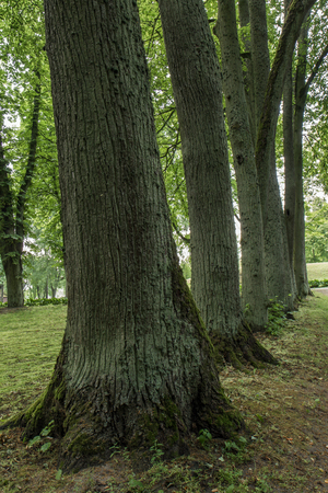 thick: thick tree