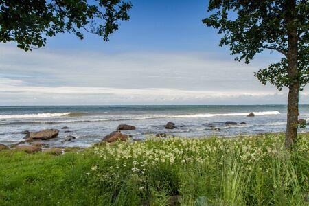 baltic sea: tree on the beach