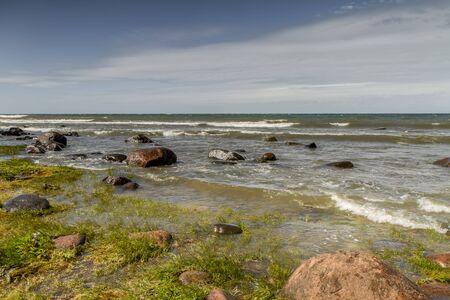 sea grass: grass in sea Stock Photo