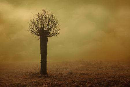 sear: Tree In Fog