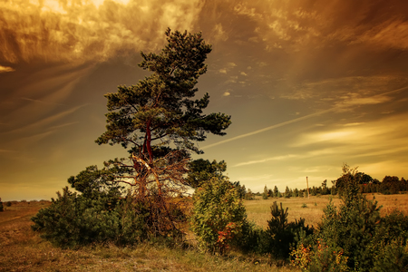 sear: The tree in the meadow Stock Photo