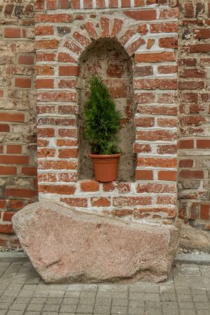 niche: plant in niche