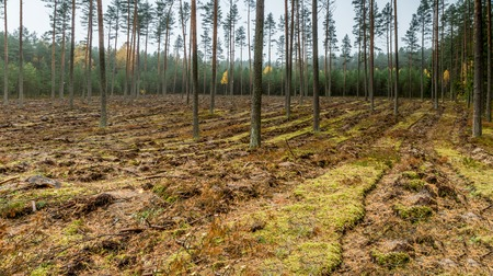 plowed: plowed land in the forest panorama