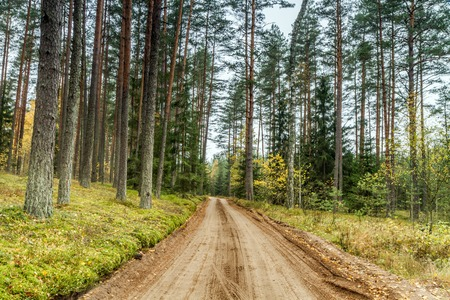 gravel: gravel path through the woods Stock Photo