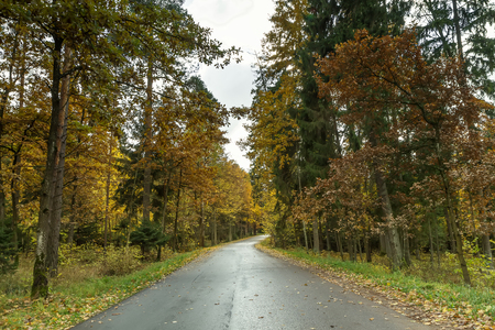 end of the days: Yellow leaves of the trees next to the road Stock Photo