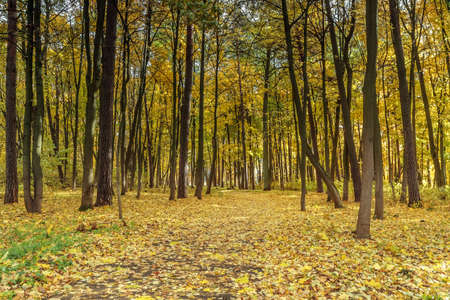 end of the days: yellow forest