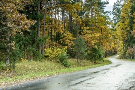 yellow trees: yellow trees
