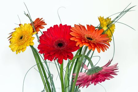 on white: Many gerberas in white