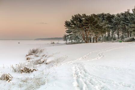 lagoon: Trees near frozen lagoon